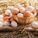 Qual a diferença entre ovo branco e ovo vermelho?