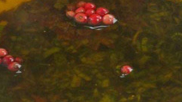 Molho de Azeite com Pimenta e Ervas Finas