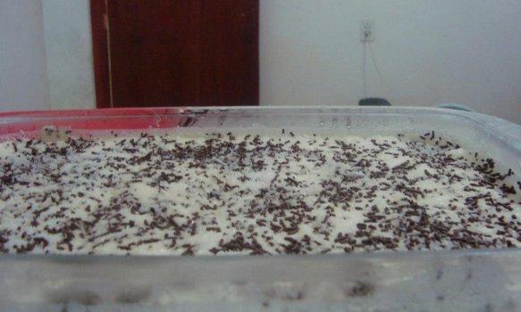 Pavê de Chocolate com Coco