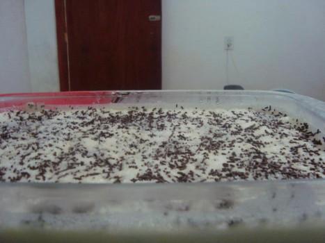Pavê de Chocolate com Coco   sandra santos paulino