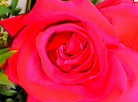 Geleia de Pétalas de Rosas Vermelhas