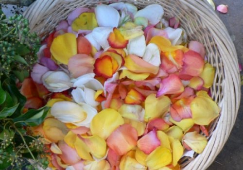 Salada de pétalas de rosas