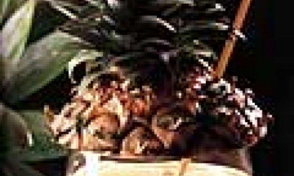 Batida de abacaxi 30 min Drinque originário do Brasil