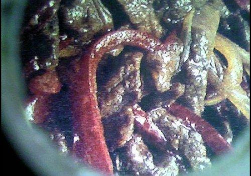 Carne desfiada com cebola e pimentão vermelho