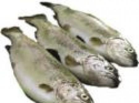 Pescada com Casca de Mamão