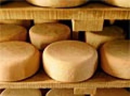 Como fazer o Queijo Minas Padrão em Casa - Queijo Minas Curado - Queijo de Colônia