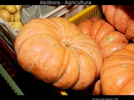 Molho de Abobora
