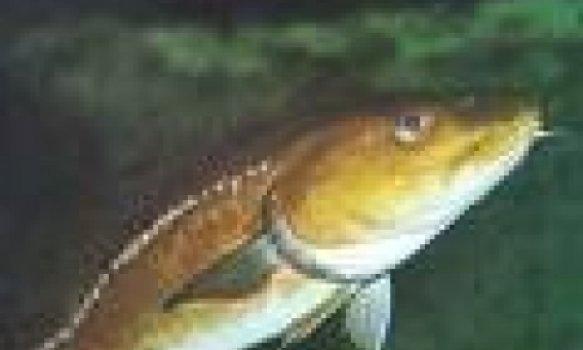Bacalhau com grão-de-bico
