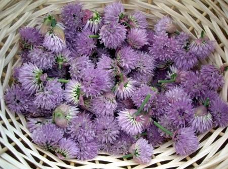 Flor de cebolina recheando Flores de abobrinha