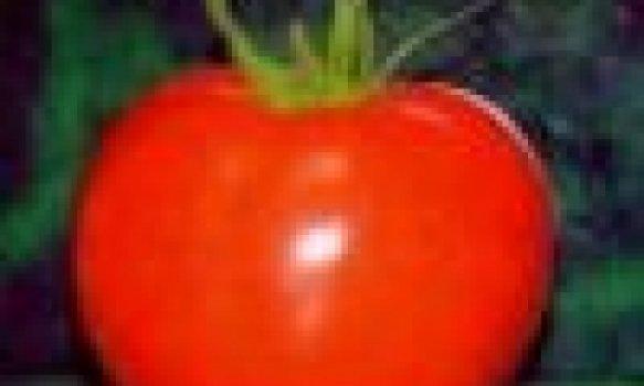 Massa de Tomate
