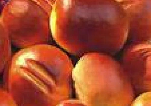 Pães de batatas e manjericão
