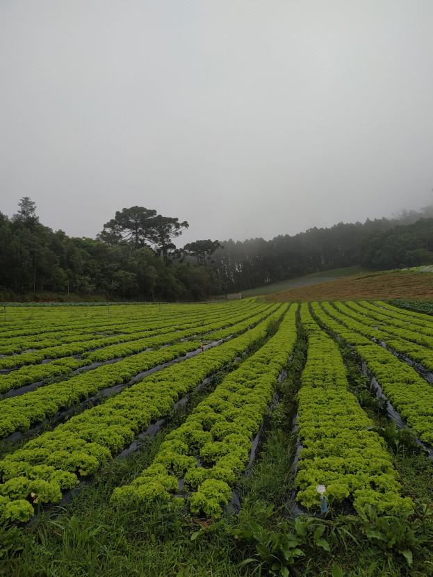 plantaçãodealface/cybercook