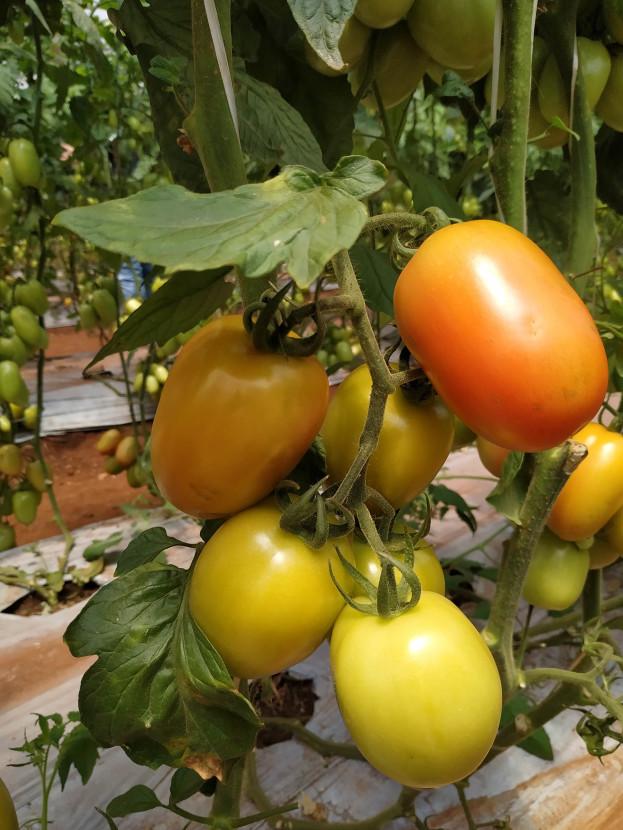 tomatesriobonito/cybercook